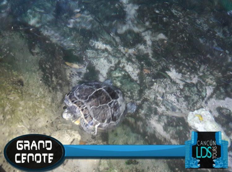 Grand Cenote Cancun LDS Tours
